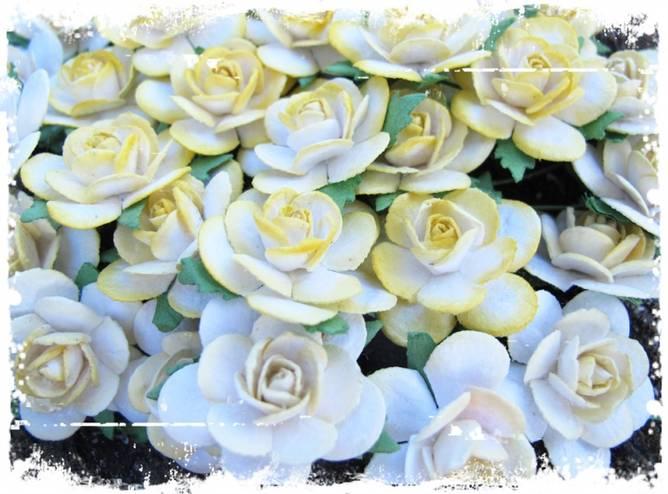 Bilde av 2,5 Roser farget kant gul (6)