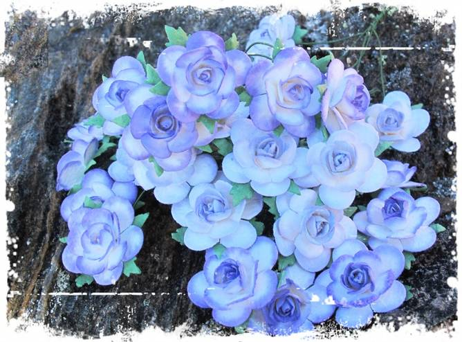 Bilde av 2,5 Roser farget kant lilla