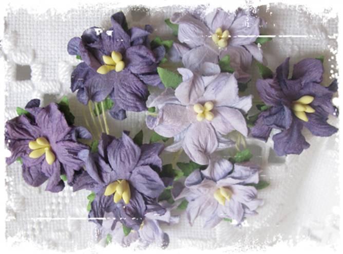 Bilde av Små gardenia, lys lilla (6)