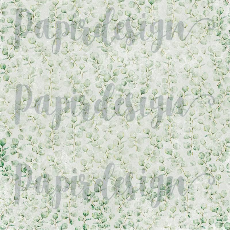 Bilde av PD 2100569 Eucalyptus ( 25 ark )