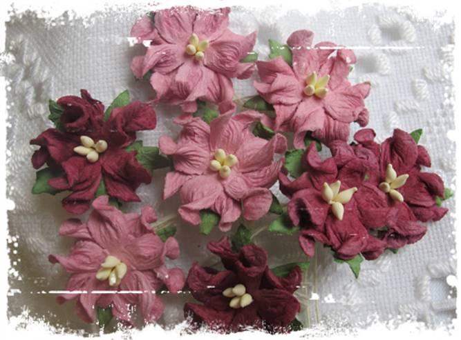 Bilde av Gardenia